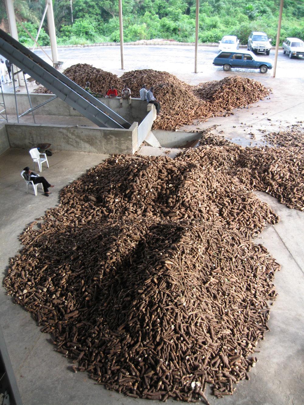 International Starch: Cassava